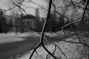 Shaun Maclellan - Branches with Faded...