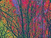 YoMamaBird Rhonda - Branches