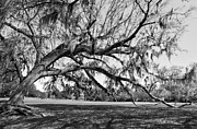 Jcookphotos Prints - Branching Out Print by Jim Cook