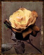 Princes Digital Art Posters - Brass Rose Poster by aGeekonaBike