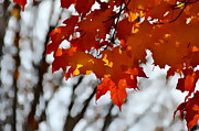 Andrea Kollo - Brazen Autumn