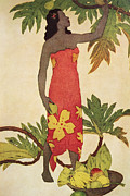 Collect Painting Framed Prints - Breadfruit Girl Framed Print by Hawaiian Legacy Archives - Printscapes