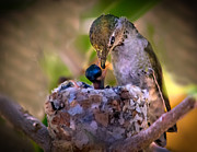 Canon Shooter Photos - Breakfast by Robert Bales