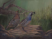 California Quail Paintings - Breaking Cover by John Durand