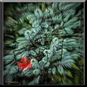 LeeAnn McLaneGoetz McLaneGoetzStudioLLCcom - Breaking into Fall