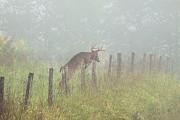 Rhonda McClure - Breaking Through The Fog