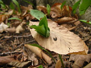 Forest Floor Photos - Breakthrough by Rhonda Barrett
