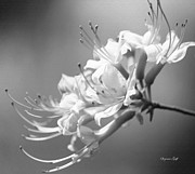 Black And White Digital Art Prints - Breathtaking in Black and White Print by Suzanne Gaff