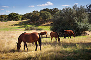 Ranch Posters - Breed of Horses Poster by Carlos Caetano