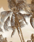 Tropical Photographs Photo Metal Prints - Breeze Metal Print by Athala Carole Bruckner