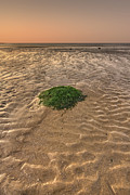 Seaweed Photos - Breeze Of Dawn by Evelina Kremsdorf