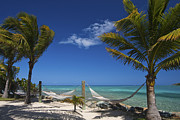 Caribbean Sea Photo Prints - Breezy Island Life Print by Adam Romanowicz