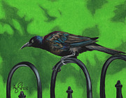 Blackbird Drawings Metal Prints - Brewers Blackbird Metal Print by Troy Argenbright