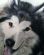 Malamute Prints - Brewser One Print by Ana Marusich-Zanor