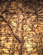 Gregory Dyer - Brick Vines
