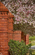 Anne Rodkin - Bricks and Blossoms
