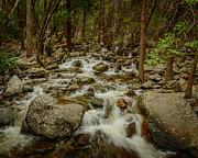 Terry Garvin - Bridalveil Creek in...