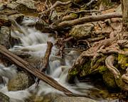 Terry Garvin - Bridalveil Creek Yosemite 2