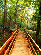 Cindy Croal - Bridge in the NC Forest