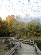 Photos Of Autumn Photo Metal Prints - Bridge into Autumn Metal Print by Guy Ricketts