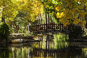 Steve Rowland - Bridge Over Fall Pond