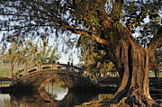 Pond In Park Framed Prints - Bridge over water at Japanese Garden Framed Print by Sami Sarkis