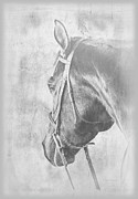 Expressionist Equine Prints - Bridled Horse Waiting Print by Renee Forth Fukumoto