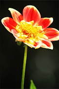 Bright Beauty 2 Print by Danielle Smith