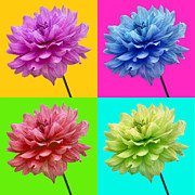 Snug Digital Art Prints - Bright Colored Dahlia Flowers Print by Natalie Kinnear