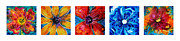 Upbeat Posters - Bright Colorful Flowers 2 - Flower Collection Best Of Sharon Cummings Poster by Sharon Cummings