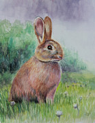 Easter Rabbit Framed Prints - Bright Eyes Framed Print by Susan Jenkins