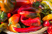 Green Grocer Prints - Bright Peppers Print by Susan Colby