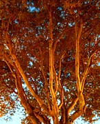 Debb Starr - Bright Rust Colored Tree
