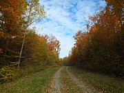 Photos Of Autumn Prints - Bright Trail Print by Gene Cyr