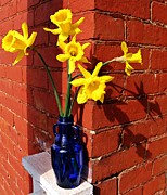 Colbalt Blue Posters - Bright Yellow Daffodils Poster by Chris Berry