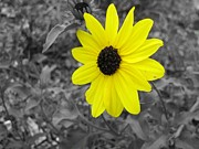 Barry Miller - Bright Yellow Flower