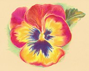 Flower Blooms Pastels Prints - Brightly Colored Pansy Print by MM Anderson