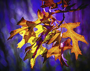 Falling Leaves Framed Prints - Brilliant Autumn Leaves Framed Print by Marion McCristall