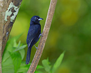 Trinidad Photos - Brilliant Black by Tony Beck