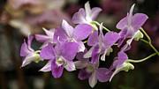 Lynn Palmer - Brilliant Magenta Orchids