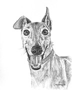 Akc Drawings Framed Prints - Brindle Greyhound Close Up Portrait Framed Print by Kate Sumners