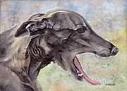 Akc Painting Framed Prints - Brindle Greyhound Sabel Framed Print by Steve Hamlin