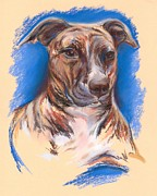 Terriers Pastels Framed Prints - Brindle Pit Bull Portrait Framed Print by MM Anderson