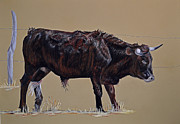 Steer Pastels - Brindle Steer by Ann Marie Chaffin