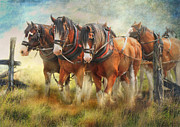 Clydesdale Posters - Bringin em Home Poster by Trudi Simmonds