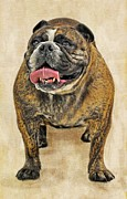 Janine Robertson - British Bulldog