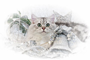 Silver Digital Art Prints - British Longhair Cat CHRISTMAS TIME II Print by Melanie Viola