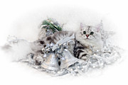 Silver Digital Art Prints - British Longhair Cat CHRISTMAS TIME Print by Melanie Viola