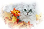 Autumn Scene Framed Prints - British Longhair Cat Framed Print by Melanie Viola