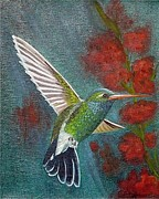Fran Brooks - Broad-Billed Hummingbird
